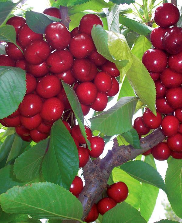 Frutos de los Lagos SA Portfolio Thumbnail